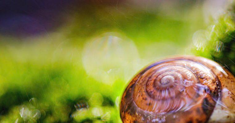 beneficial snail secretion