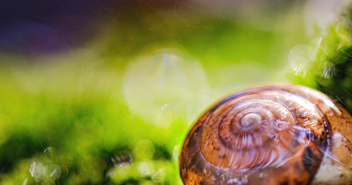Ευεργετικές ιδιότητες του εκκρίματος του σαλιγκαριού